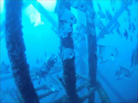 Home Page - Texas State Aquarium