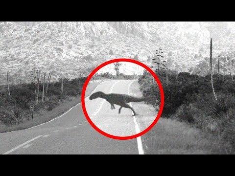 The Africa Monster   Modern Day Dinosaur Sightings In ...