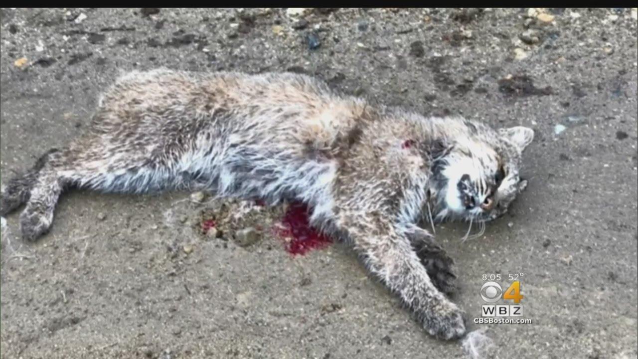 Dogs Kill Cat Liveleak