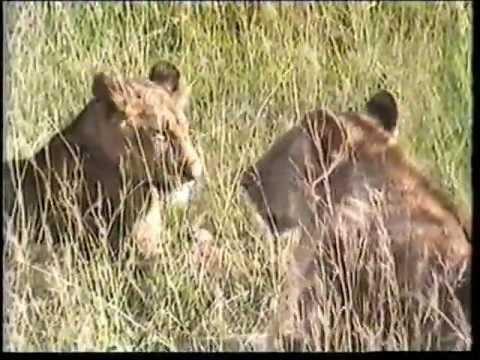 Sarroch,cenzovacca,Viaggi: Kenia e Tanzania.