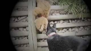 ultimate dog attack on bear fight til death dog vs bear