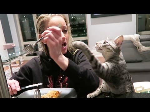 PSYCHO CAT!!