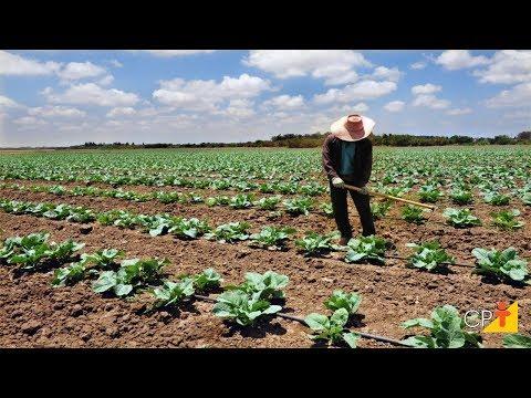 Clique e veja o vídeo Curso de Integração Lavoura, Pecuária e Eucalipto - Ciclo de Cultivo - Cursos CPT