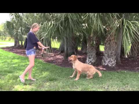Max Pro® Obey® is a pet training tool which corrects unwanted pet behavior