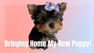 Bringing Home My New Yorkie Puppy! | First Day Home | Vlog