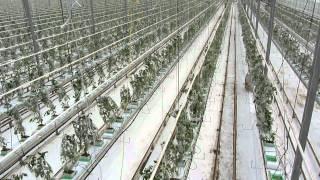 Overzicht van een week bij T.W. van Noord Tomaten
