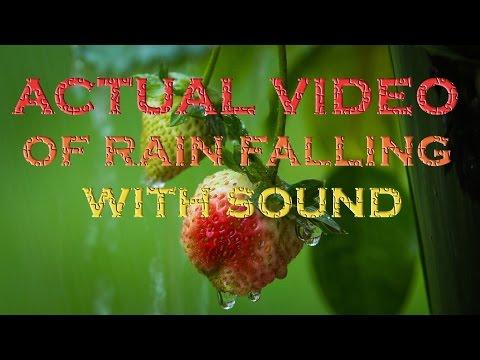 RAIN SOUNDS 8 HOURS OF REAL RAIN VIDEO & AUDIO