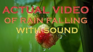 RAIN SOUNDS 8 HOURS OF REAL RAIN VIDEO & AUDIO