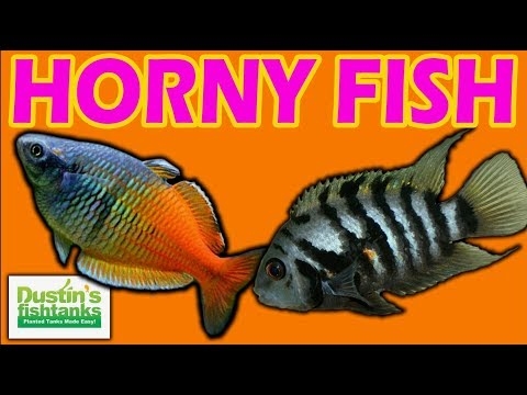 TOP 5 AQUARIUM FISH: BREED EASY FISH!  Tips On How To Get Your Fish Spawning