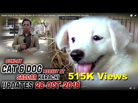 Saddar Dogs & Cats Sunday Market 28-10-2018 Latest Updates ( Jamshed Asmi Informative Channel)
