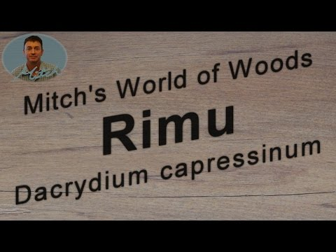 Rimu (Dacrydium cupressinum) - Mitch's World of Woods