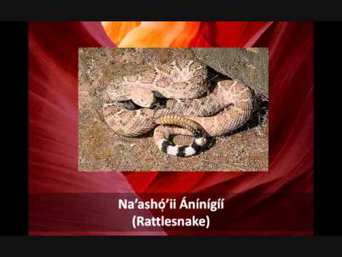How to Name Animals in the Navajo Language