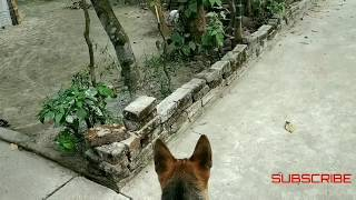 Rocky's (DOG)  reaction to the kitten  ... Best Enemies :-) Dog's reaction when see the cat