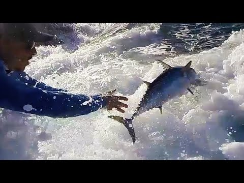 Catch and Release Fishing for Pelagic Fish