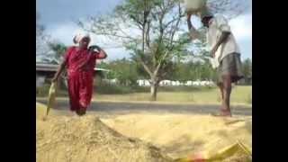 Dhanyam Yegarabotha (Rice Winnowing)