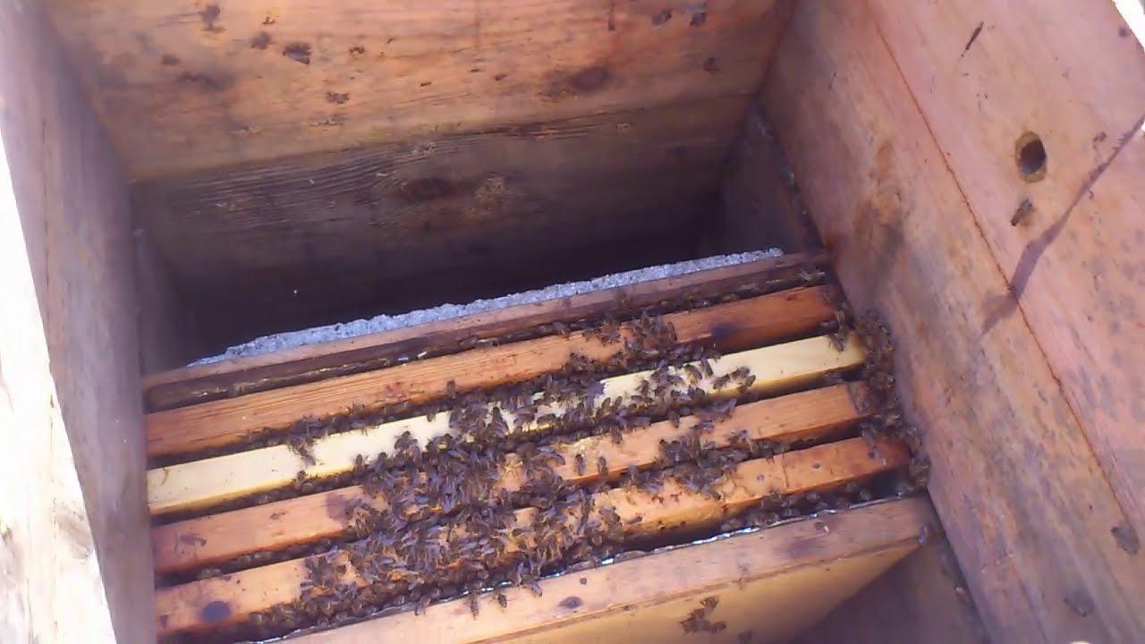 Слабая пчелосемья - Что делать?