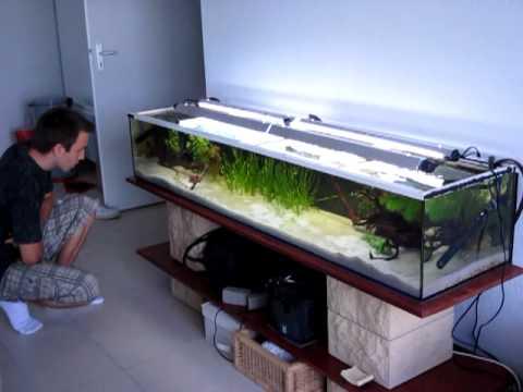 Aquarium Amazonien 240l Youtube