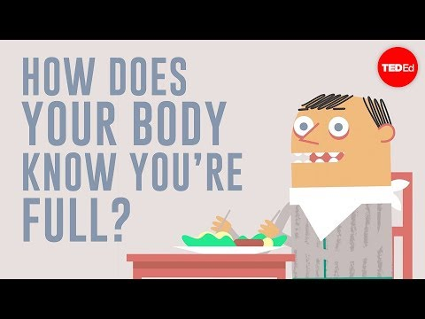 Video image: How does your body know you're full? - Hilary Coller