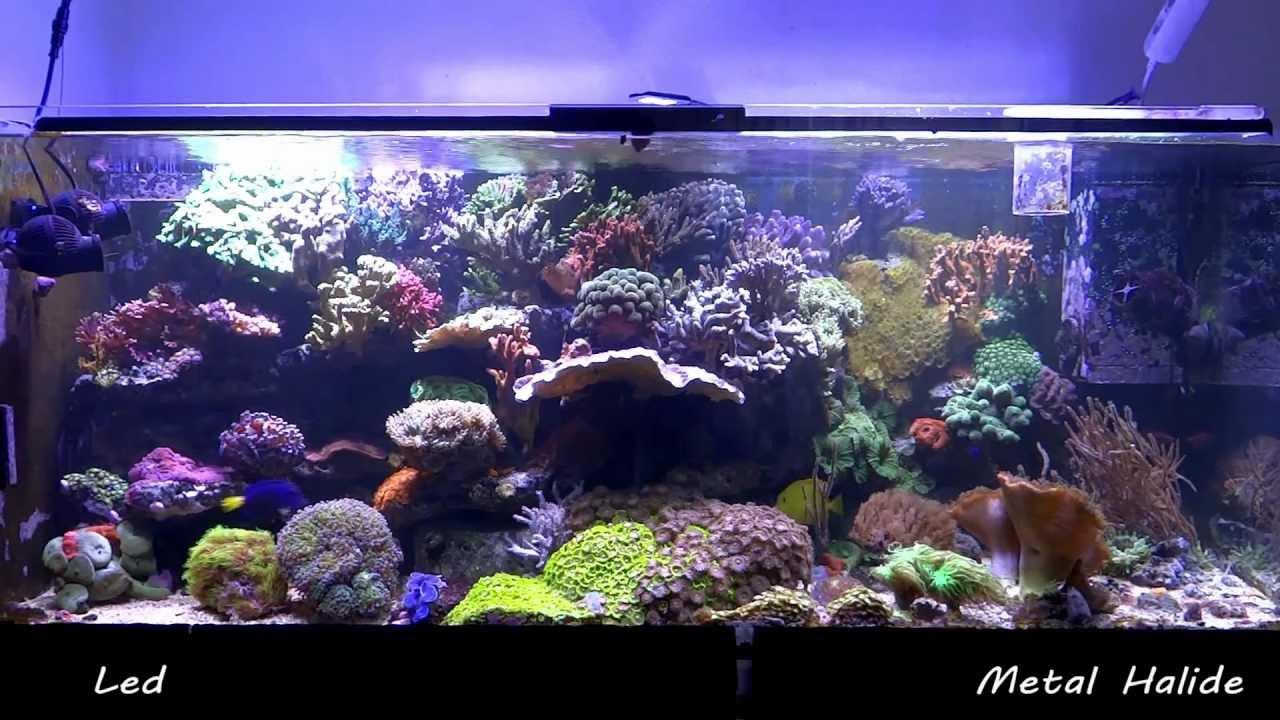Pit 180 S Reef Tank Maxspect Razor 160w Led Vs Metal Halide