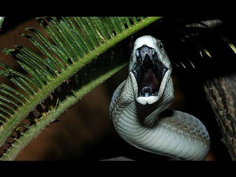 Dünyanın En Zehirli 7 Korkunç Yılanı