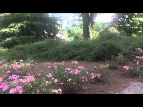 Backyard Ecosystem WebQuest - YouTube