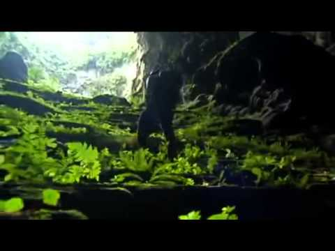 SonDoongCave:   Amazing forest inside Son Doong Cave   BBC How To Grow A Planet
