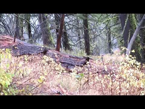 Rifle Elk Hunt in Central Idaho