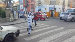 The La Paz Traffic Zebras Are Awesome!