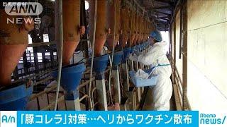 """野生イノシシ向け""""豚コレラ""""経口ワクチン散布開始(19/12/20)"""