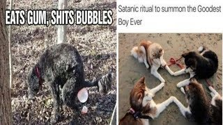 Cute Animals Being Dumb Memes That Will Make Your Day 😍 😍😍||#2