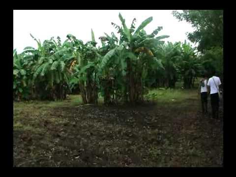 Finca en venta en granada nicaragua youtube - Fincas para celebraciones en telde ...