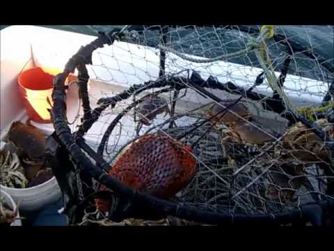Pacific Ocean Coho & Crab Fishing Tillamook Bay Oregon Sept 2011