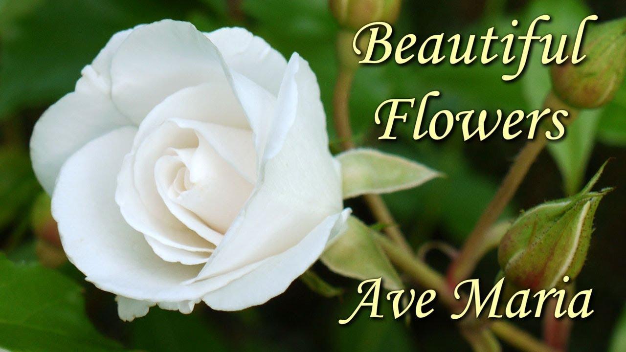 Beautiful Arabic Girl Wallpaper Beautiful Flowers Hd 3 Slideshow Of Spring And Summer