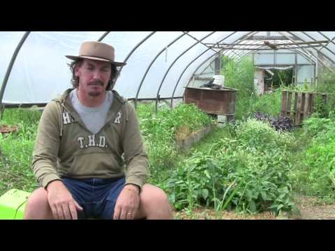 Permaculture and Transitioning Industrial Agriculture Systems