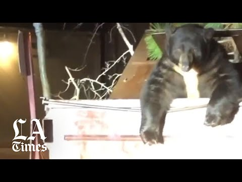 Wake Up Call - Video: Deputies Help a Bear Escape from a Dumpster