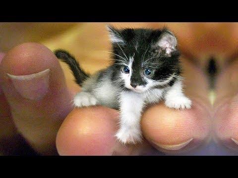 おかしい猫 - かわいい猫 - おもしろ猫動画 HD #248