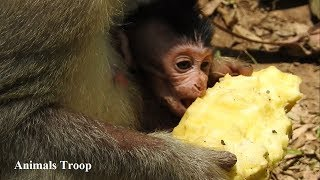 It main reason that he gone away, Pity Poor newborn, Why mom no milk for baby,Monkey Region Part 44