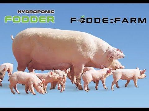 Home - Hydroponic Green Fodder Growing System - Machine - Farm
