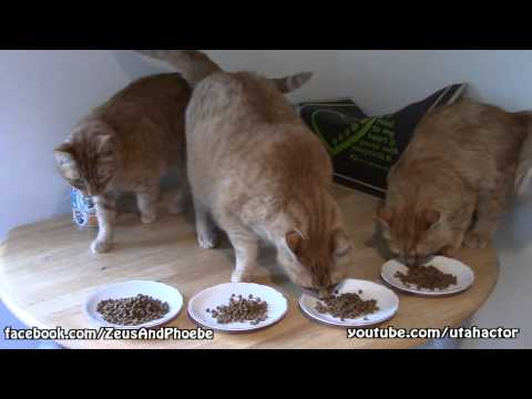 Only Natural Pet® Poultry Dinner Cat Food Review