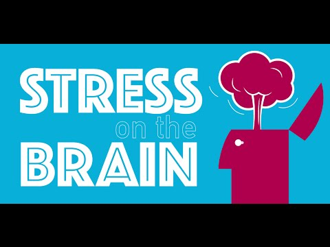 Stress On The Brain