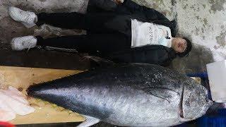 노량진수산시장 참다랑어 생참치회 Tuna sashimi - Noryangjin Fisheries Wholesale Market