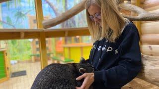 ВЛОГ Маникюр для меня и Киры и контактный зоопарк