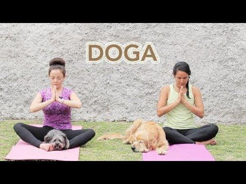 Download ¡A PRACTICAR DOGA! - RUTINA DE YOGA CON TU PERRO 🔝👆🐾🐶💖