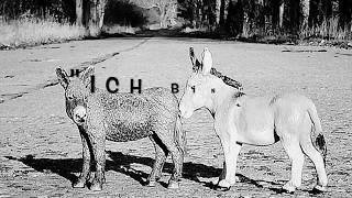 """""""Die beiden Esel"""""""