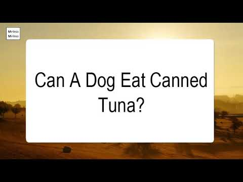 Can A Dog Eat Canned Tuna