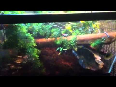 How To Setup A Baby Water Dragon Tank Youtube