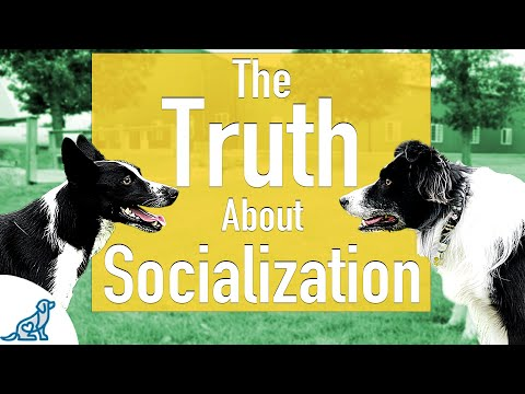The Unpopular Truth About How To Socialize Your Dog