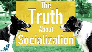 The Unpopular Truth About Socializing Your Dog..