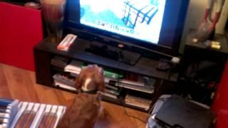Собака играет в майнкрафт