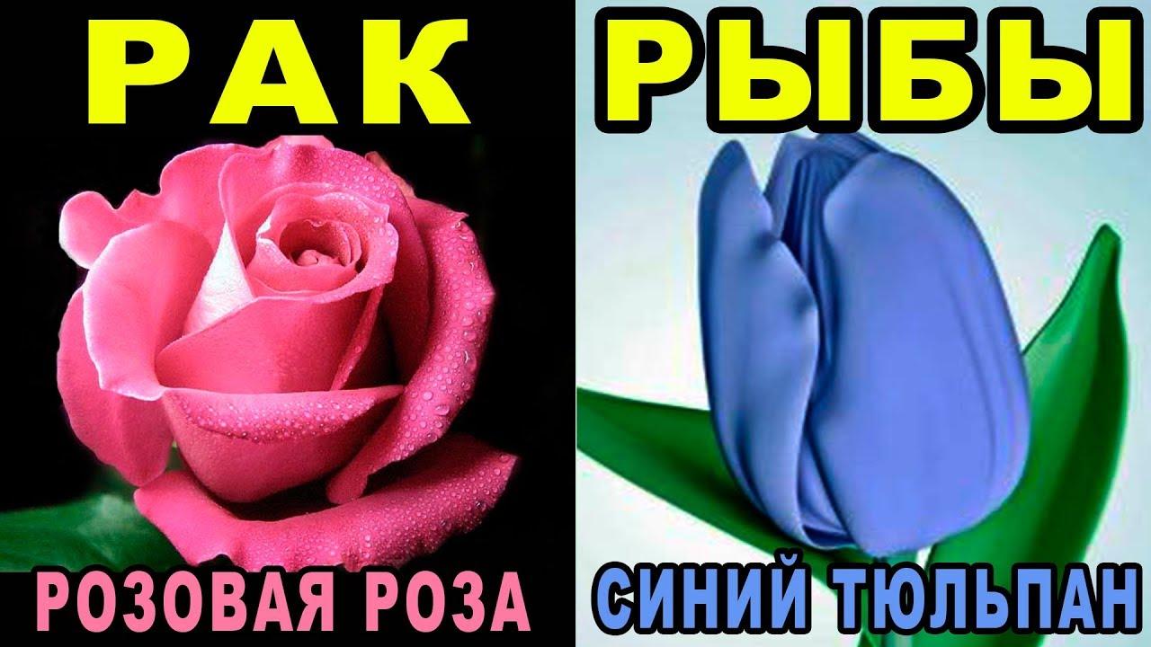 Цветок по дате рождения и знаку зодиака
